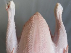 وزن مناسب لاشه استحصالی مرغ 1800-1200 گرم
