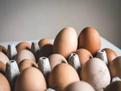 درج قیمت مصوب روی مرغ و تخم مرغ الزامی شد