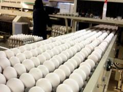 صادرات تخممرغ آغاز شد.