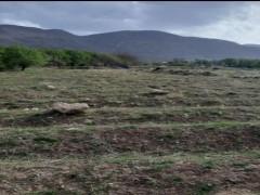 زمین  کشاورزی  ۱۰۰۰ متری دارای نهال بادام در روستای بالقلو