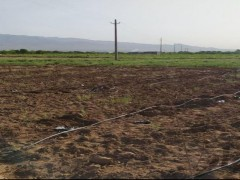 زمین  کشاورزی  ۱۱۰۰۰ متری در زرندیه