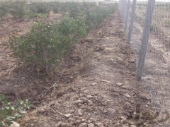 زمین  کشاورزی  ۱۰۰۰ متر با آب و برق و تمام امکانات