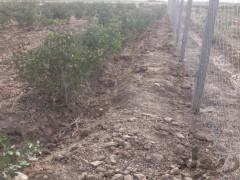 زمین  کشاورزی  در جاده سد