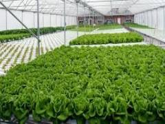 تعهد مهندس ناظر گلخانه و قارچ خوراکی