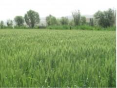 آشنایی با اصول مدیریت مزرعه
