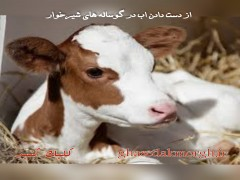 از دست دادن آب در گوساله های شیرخوار