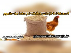 استفاده از نان خشک در تغذیه طیور