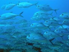 بررسی پروبیوتیک در ماهی قزل آلا