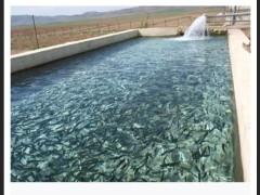 تاثیر پساب مزارع پروش ماهی بر عملکرد  هیدرولیکی  قطره چکان ها