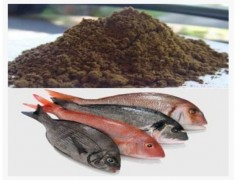 پودر ماهی