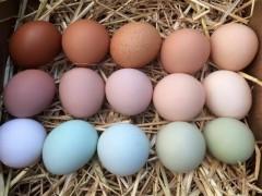 بهبود کیفیت پوسته تخم مرغ از طریق اعمال مدیریت تغذیه