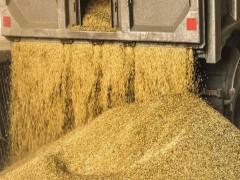 تأخیر در تخصیص ارز و ترخیص کالا معضل تأمین نهادههای دامی
