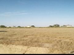 زمین کشاورزی  ۵۰۰۰ متری