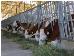 اثر غلظتهای بالای موادمعدنی کم مصرف الی وغیرالی بر پروژسترون پلاسما وعملکرد تولید مثلی در گاوهای با فحلی مکرر
