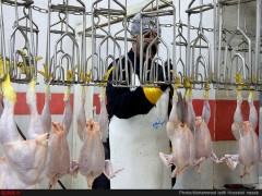 روند افزایش قیمت مرغ شدت گرفت