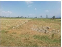 زمین  کشاورزی  ۱۰۰۰۰