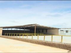 گاوداري صنعتی  در جاده بوئین زهرا