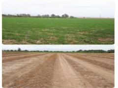 زمین کشاورزی ۷۰۰ متری