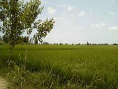 زمین  کشاورزی  فوری