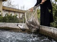 کیفیت آب در پرورش ماهیان قزل آلا
