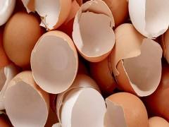 بررسي تاثير شستشوي پوسته تخم مرغ با آب سرد بر آلودگي سالمونلا در پوسته و محتويات آن