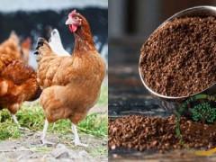 دانلود رایگان ترجمه مقاله مدل ANN برای اثرات کودهای مرغی بر روی آب های زیرزمینی