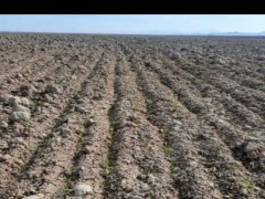 زمین  کشاورزی  و گاوداری