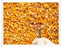 تاثیر حرارت در از بین بردن  سم آفلاتوکسین