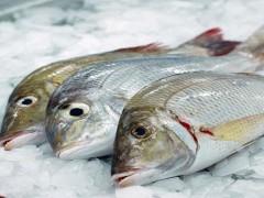 فواید مصرف غذای دریایی
