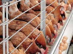چرا دولت دوازدهم در تنظیم بازار محصولات پروتئینی شکست خورد؟