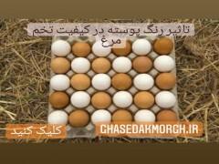تاثیر رنگ پوسته روی کیفیت و جوجه درآوری تخم مرغ