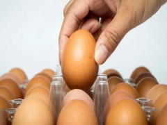 مهمترین اختلالات مربوط به شکل ظاهری تخم مرغ