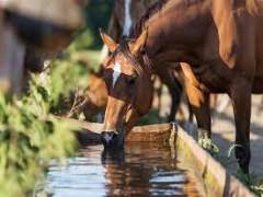 علل کم ابی در اسب و مدیریت درمان و پیشگیری از ان